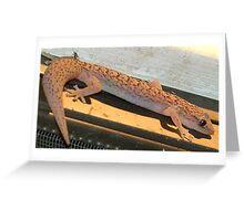 gekko evening Greeting Card