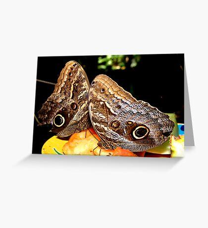 Owl Butterflies Greeting Card