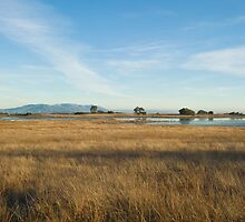 Santa Rosa Plateau Reserve vernal pool by David Jones