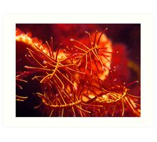 Feather Star Fronds Art Print