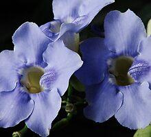 Flowers by DeannaLyn