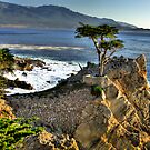 Lone Cypress at Pebble Beach by Paul J. Owen