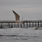 Seagull At Lynnhaven Pier by meinvb