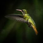 Hummingbird of Iguazu - No. 2 by photograham