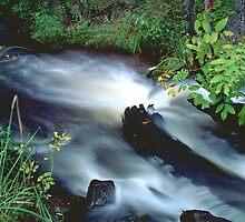 Tuppman Creek by Bill Morgenstern