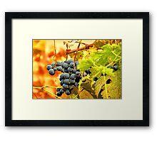 Grape Vines in Autumn Framed Print