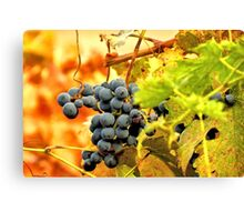Grape Vines in Autumn Canvas Print