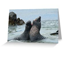 Elephant seals sparing on the beach Greeting Card