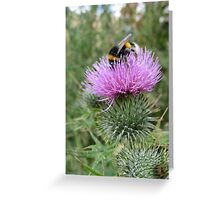bumble bee on a thistle Greeting Card