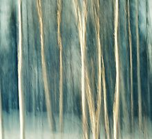 Snowy Birch Grove by Priska Wettstein