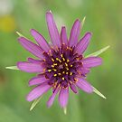 purple by Rosemaree