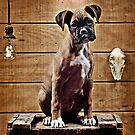 Boxer On A Box by Von McKnelly
