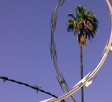 Palm Tree in Barbed Wire by noaheberhart