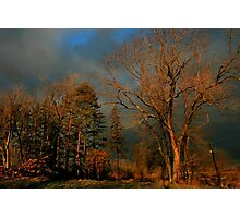After The Fire - Treestand Photographic Print