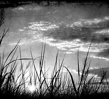 Through the Grass by Jonicool
