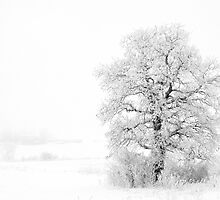 Snow Tree by Kelvin Andow