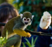 Don't feed the squirrel monkey by Daveart