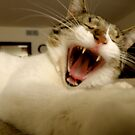 FUNNY FELINE FACE by Tracy Jule