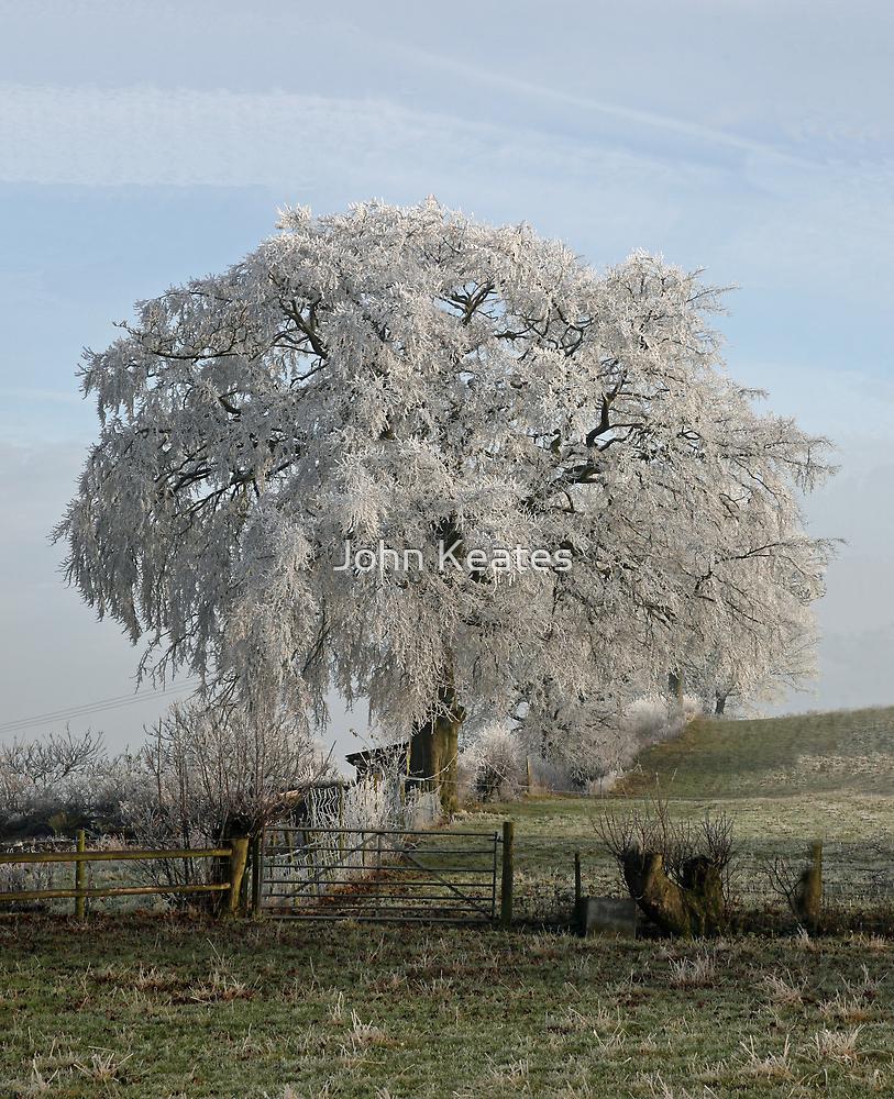 Frosty Beech by John Keates
