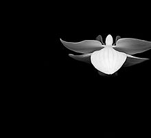 flying orchid b&w by Francesca Rizzo