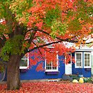 Blue House Red Leaves by Christopher Dunn