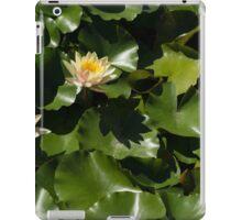 Exotic Colored Waterlilies in the Hot Mediterranean Sun iPad Case/Skin