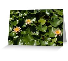 Exotic Colored Waterlilies in the Hot Mediterranean Sun Greeting Card