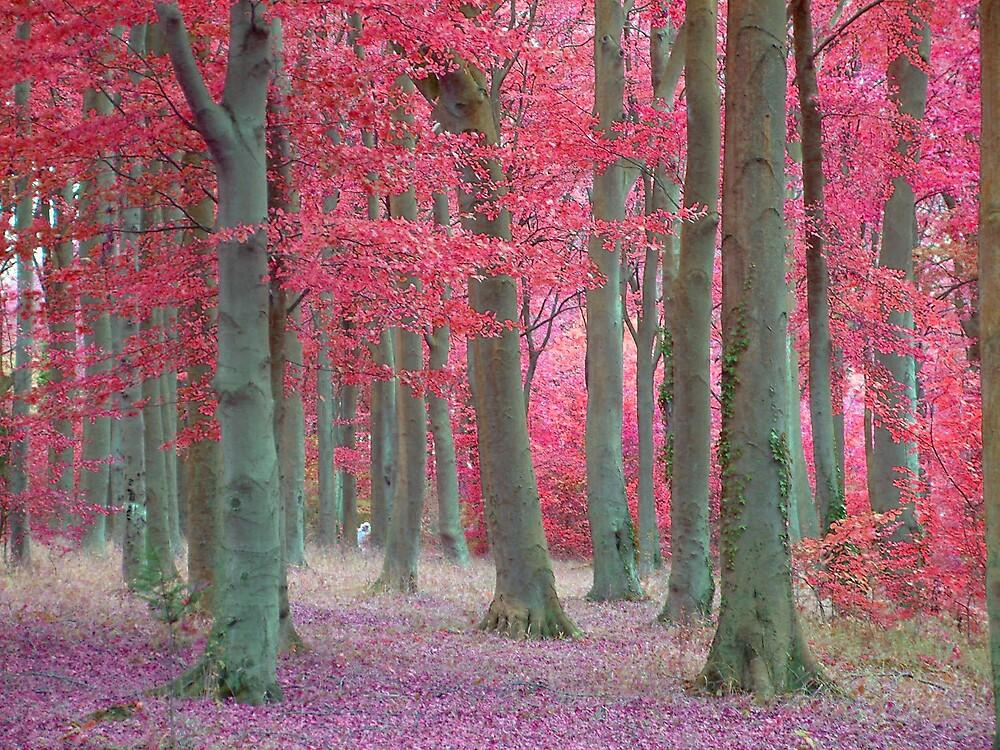 Fairy Woods by IngridSonja