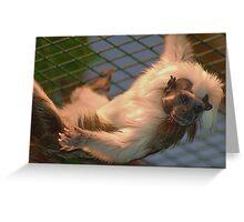 Cotton-top tamarin Greeting Card