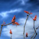 Ocotillo Blooms by Susan E. Adams