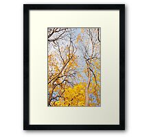 Yellow autumn leaves on trees  Framed Print