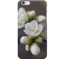 white flowers on tree in spring iPhone Case/Skin