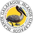 Galapagos Islands Pelican by Zehda