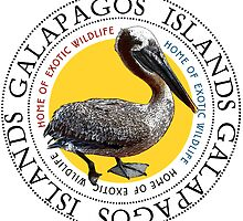 Galapagos Islands Pelican by Zehda