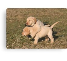 Yellow Lab Puppies Canvas Print