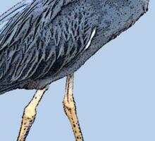 Galapagos Islands Night Heron Sticker
