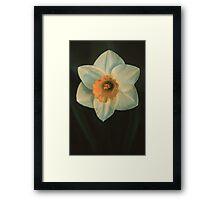 Bi-Color Daffodil Framed Print