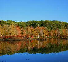 Fall In the Finger Lakes by mklue