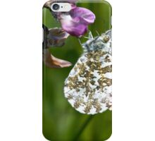 Orange-tip butterfly iPhone Case/Skin