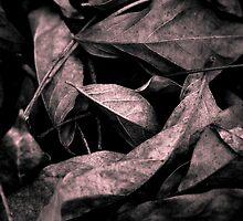 Leaves by Brad Riley