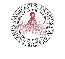 Galapagos Islands Octopus Photographic Print