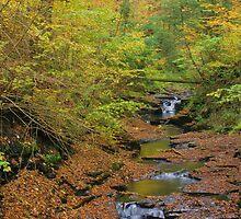 Fillmore Glen, Moravia, NY by mklue