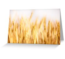 Golden cereal ears grow  Greeting Card