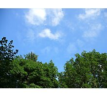 Trees and sky  Photographic Print