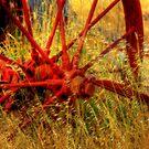 Overgrown Wheel by Jennifer Craker