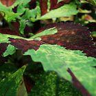 Leaf by DeannaLyn