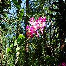 Bundle of Pink by Jessie Harris