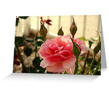 Pink Rose & Rosebuds Greeting Card