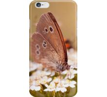 Ringlet brown butterfly  iPhone Case/Skin