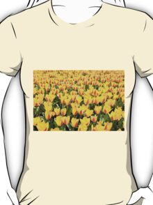 yellow and red Stresa tulips abloom  T-Shirt